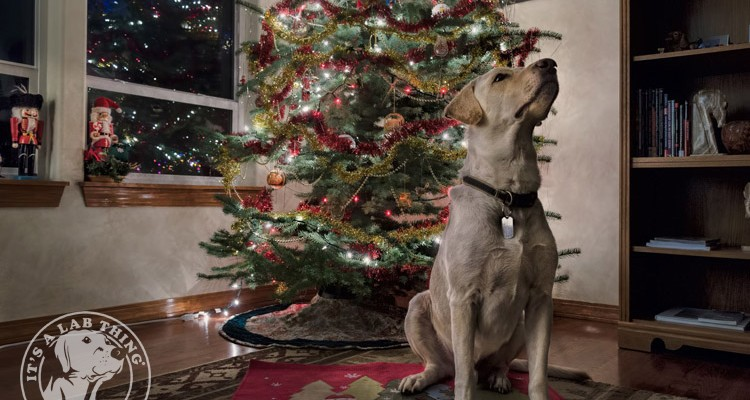 001-Christmas-Holiday-Labrador-Retrievers-Presents-Santa-