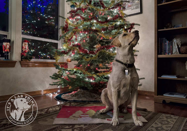 Ultimate Holiday Christmas Labrador Retrievers Album