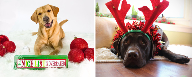 002-Christmas-Holiday-Labrador-Retrievers-Presents-Santa-