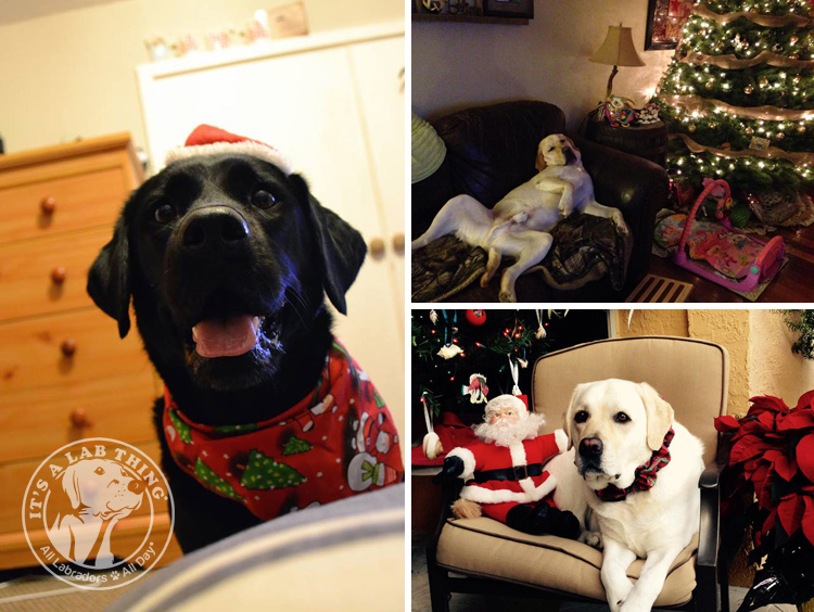 005-Christmas-Holiday-Labrador-Retrievers-Presents-Santa-