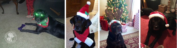 008-Christmas-Holiday-Labrador-Retrievers-Presents-Santa-