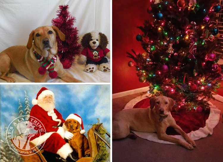 013-Christmas-Holiday-Labrador-Retrievers-Presents-Santa-