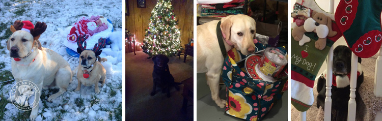 015-Christmas-Holiday-Labrador-Retrievers-Presents-Santa-