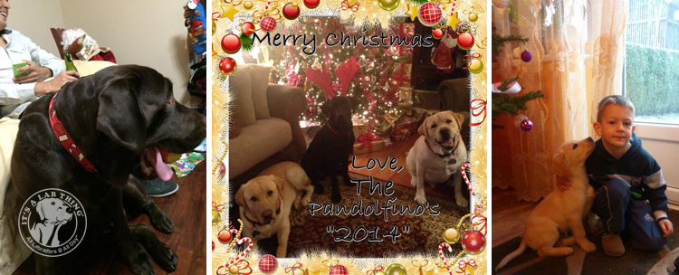 024-Christmas-Holiday-Labrador-Retrievers-Presents-Santa-