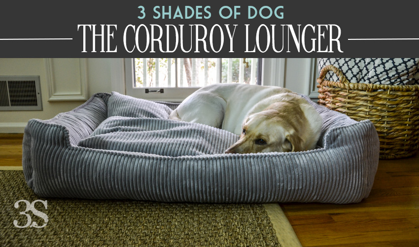 corduroy-dog-bed-lounger-for-big-dogs-luxury-dog-accessories-for-labradors