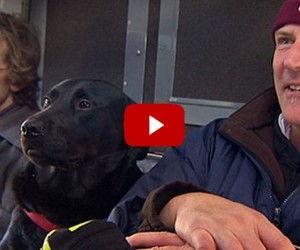 Black Labrador Rides Bus to the Park All By Herself