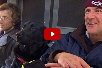 black labrador in Seattle riding the bus to dog park
