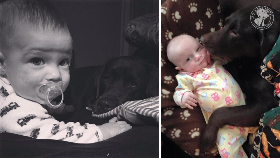 super cute babies with labrador retrievers