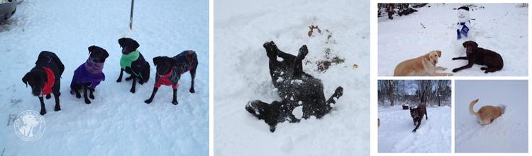 007-Winter_Play_Snow_blizzard_labrador_retrievers_