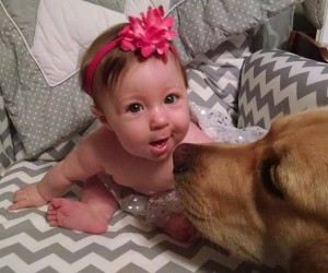 Super Cute Labrador and Baby Pictures Will Have You Smiling Ear to Ear