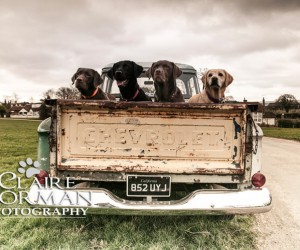 Nostalgic Scenes of Labradors with Claire Norman