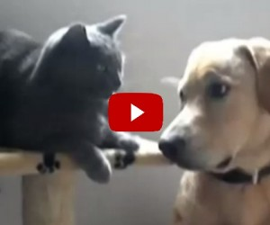 Can We Just Be Friends? Dogs Disturbing Cats with Friendship