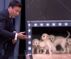 Puppies Predict 2015 NCAA Final Four Championship on Late Night with Jimmy Fallon