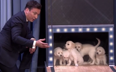 labrador_golden_retriever_puppies_predict_the_2015_final_four_championship_tonight_show_jimmy_fallon