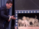 labrador_golden_retriever_puppies_predict_the_2015_final_four_championship_tonight_show_jimmy_fallon