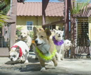 Video: Spa Day for the Doggies. Pure Heaven!